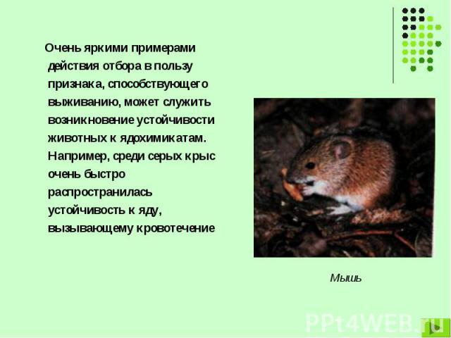Очень яркими примерами действия отбора в пользу признака, способствующего выживанию, может служить возникновение устойчивости животных к ядохимикатам. Например, среди серых крыс очень быстро распространилась устойчивость к яду, вызывающему кровотече…