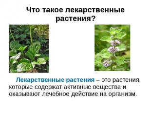 Что такое лекарственные растения? Лекарственные растения – это растения, которые