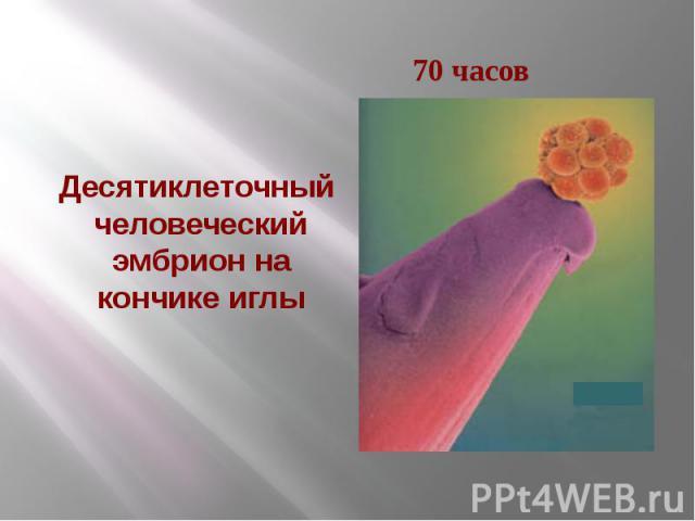 Десятиклеточный человеческий эмбрион на кончике иглы