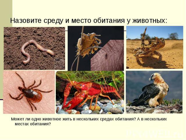 Назовите среду и место обитания у животных: Назовите среду и место обитания у животных: