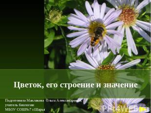Цветок, его строение и значение