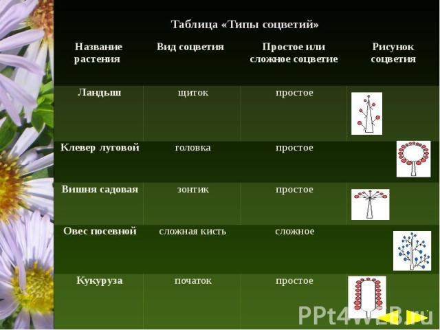 Таблица «Типы соцветий»