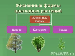 Жизненные формы цветковых растений