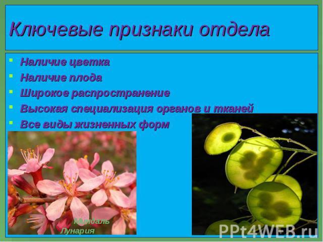 Наличие цветка Наличие цветка Наличие плода Широкое распространение Высокая специализация органов и тканей Все виды жизненных форм
