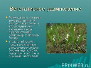 Размножение частями тела растения или низшего животного, в этом случае оно назыв