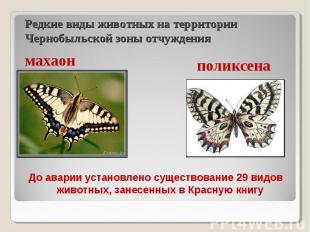 До аварии установлено существование 29 видов животных, занесенных в Красную книг