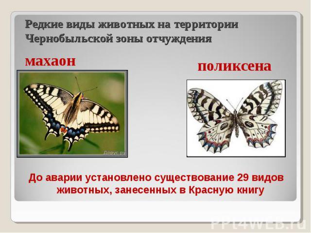 До аварии установлено существование 29 видов животных, занесенных в Красную книгу До аварии установлено существование 29 видов животных, занесенных в Красную книгу