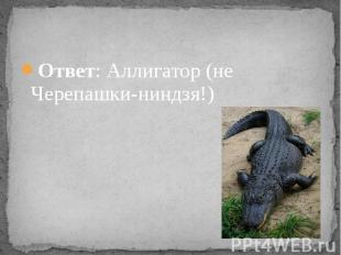 Ответ: Аллигатор (не Черепашки-ниндзя!)