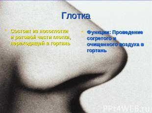 Функции: Проведение согретого и очищенного воздуха в гортань Функции: Проведение