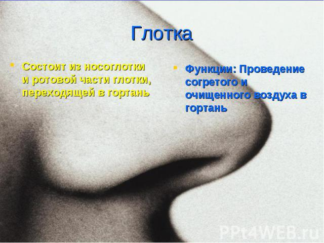 Функции: Проведение согретого и очищенного воздуха в гортань Функции: Проведение согретого и очищенного воздуха в гортань
