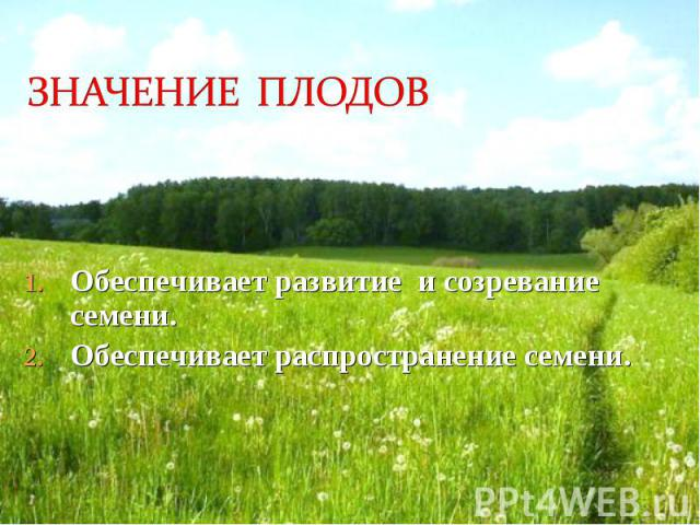 Обеспечивает развитие и созревание семени. Обеспечивает развитие и созревание семени. Обеспечивает распространение семени.