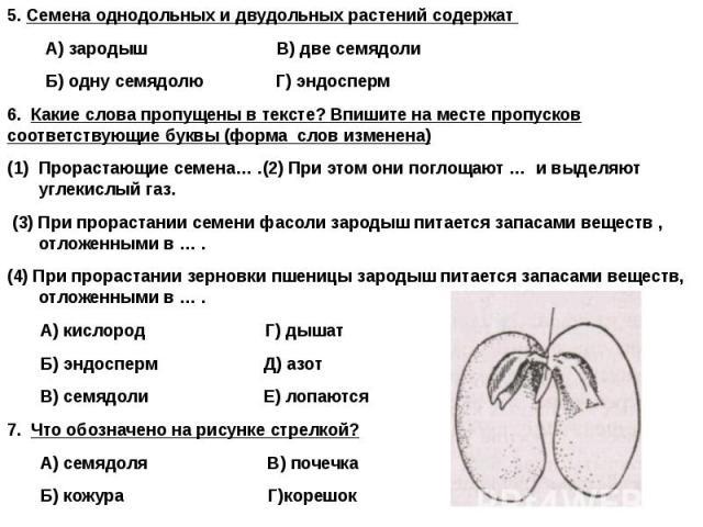 5. Семена однодольных и двудольных растений содержат 5. Семена однодольных и двудольных растений содержат А) зародыш В) две семядоли Б) одну семядолю Г) эндосперм 6. Какие слова пропущены в тексте? Впишите на месте пропусков соответствующие буквы (ф…