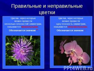 Цветки, через которые можно Цветки, через которые можно провести несколько плоск