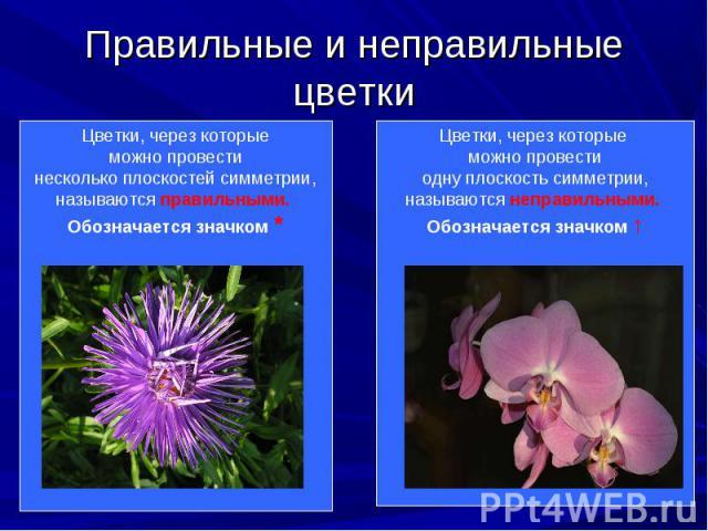 Цветки, через которые можно Цветки, через которые можно провести несколько плоскостей симметрии, называются правильными.