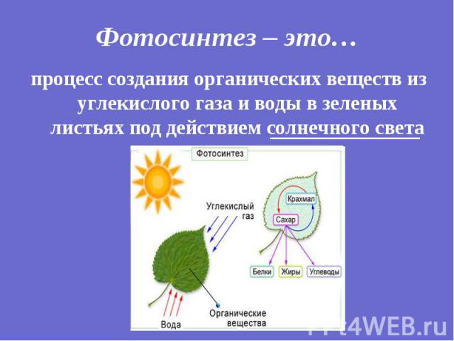 процесс создания органических веществ из углекислого газа и воды в зеленых листьях под действием солнечного света процесс создания органических веществ из углекислого газа и воды в зеленых листьях под действием солнечного света