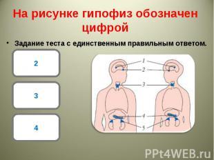Задание теста с единственным правильным ответом. Задание теста с единственным пр