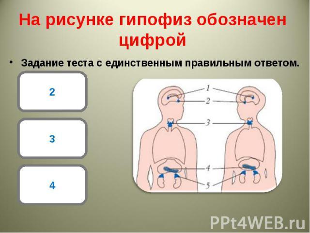 Задание теста с единственным правильным ответом. Задание теста с единственным правильным ответом.