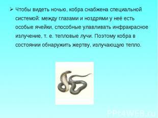 Чтобы видеть ночью, кобра снабжена специальной системой: между глазами и ноздрям