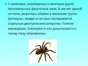 У насекомых, ракообразных и некоторых других беспозвоночных фасеточные глаза. В
