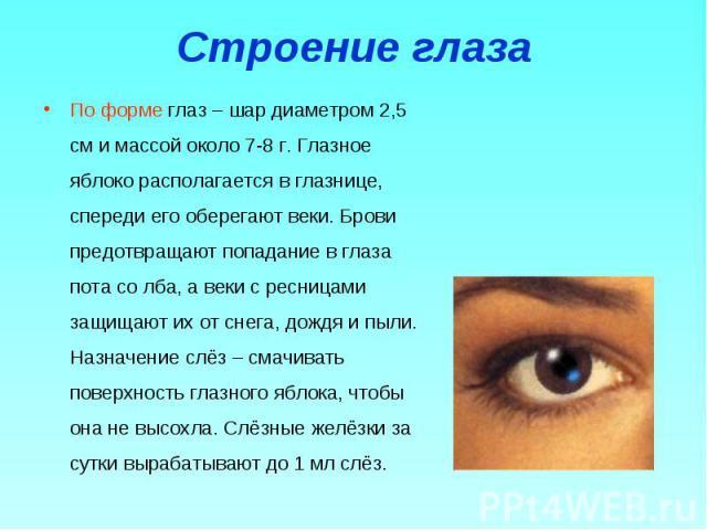 По форме глаз – шар диаметром 2,5 см и массой около 7-8 г. Глазное яблоко располагается в глазнице, спереди его оберегают веки. Брови предотвращают попадание в глаза пота со лба, а веки с ресницами защищают их от снега, дождя и пыли. Назначение слёз…