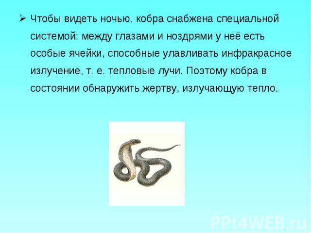 Чтобы видеть ночью, кобра снабжена специальной системой: между глазами и ноздрями у неё есть особые ячейки, способные улавливать инфракрасное излучение, т. е. тепловые лучи. Поэтому кобра в состоянии обнаружить жертву, излучающую тепло. Чтобы видеть…