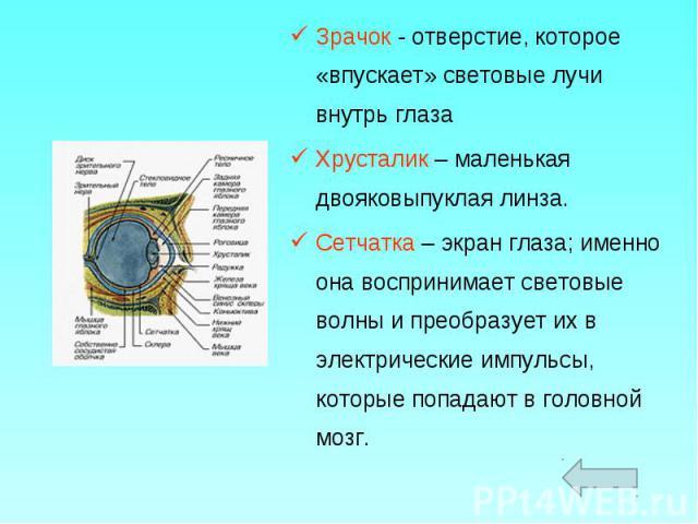 Зрачок - отверстие, которое «впускает» световые лучи внутрь глаза Зрачок - отверстие, которое «впускает» световые лучи внутрь глаза Хрусталик – маленькая двояковыпуклая линза. Сетчатка – экран глаза; именно она воспринимает световые волны и преобраз…
