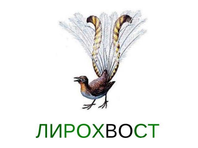 ЛИРОХВОСТ