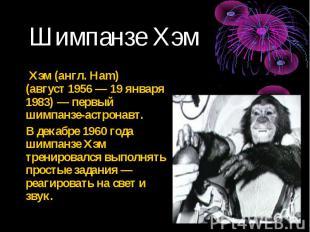 Хэм (англ. Ham) (август 1956 — 19 января 1983) — первый шимпанзе-астронавт. Хэм
