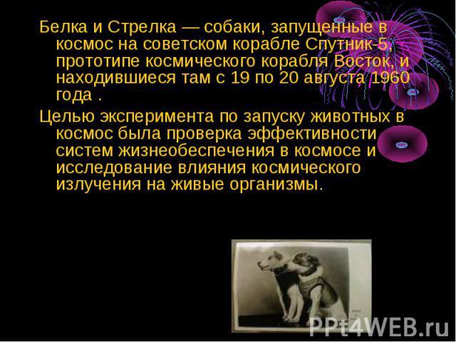 Белка и Стрелка — собаки, запущенные в космос на советском корабле Спутник-5, прототипе космического корабля Восток, и находившиеся там с 19 по 20 августа 1960 года . Белка и Стрелка — собаки, запущенные в космос на советском корабле Спутник-5, прот…