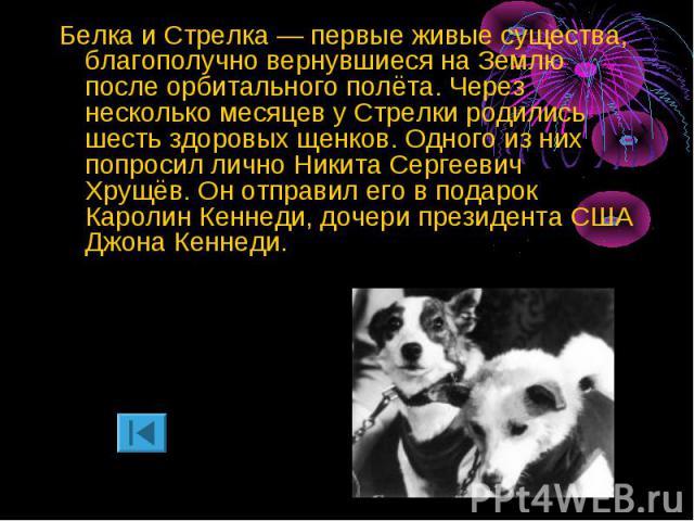 Белка и Стрелка — первые живые существа, благополучно вернувшиеся на Землю после орбитального полёта. Через несколько месяцев у Стрелки родились шесть здоровых щенков. Одного из них попросил лично Никита Сергеевич Хрущёв. Он отправил его в подарок К…