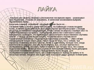 ЛАЙКА -Альбина уже дважды летала и достаточно послужила науке, - разказывал мне