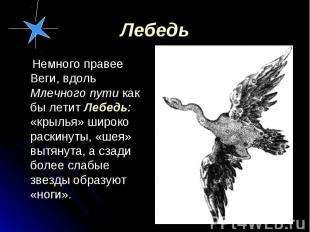 Немного правее Веги, вдоль Млечного пути как бы летит Лебедь: «крылья» широко ра