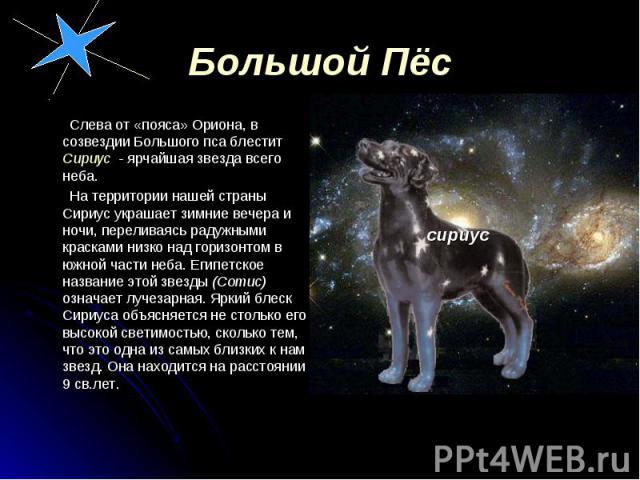 Слева от «пояса» Ориона, в созвездии Большого пса блестит Сириус - ярчайшая звезда всего неба. Слева от «пояса» Ориона, в созвездии Большого пса блестит Сириус - ярчайшая звезда всего неба. На территории нашей страны Сириус украшает зимние вечера и …