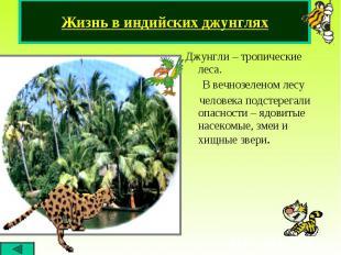 Джунгли – тропические леса. Джунгли – тропические леса. В вечнозеленом лесу чело