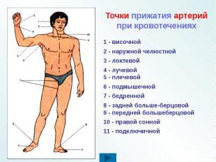 Точки прижатия артерий при кровотечениях