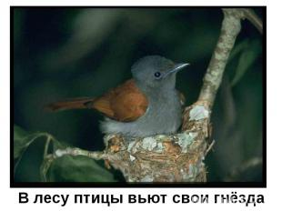 В лесу птицы вьют свои гнёзда