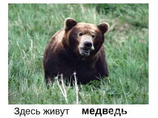 Здесь живут медведь