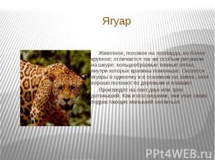Ягуар Животное, похожее на леопарда, но более крупное; отличается так же особым