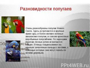 Разновидности попугаев