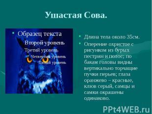 Ушастая Сова. Длина тела около 35см. Оперение охристое с рисунком из бурых пестр