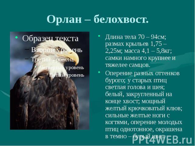 Орлан – белохвост. Длина тела 70 – 94см; размах крыльев 1,75 – 2,25м; масса 4,1 – 5,8кг; самки намного крупнее и тяжелее самцов. Оперение разных оттенков бурого; у старых птиц светлая голова и шея; белый, закругленный на конце хвост; мощный желтый к…