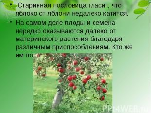 Старинная пословица гласит, что яблоко от яблони недалеко катится. На самом деле
