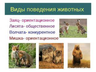 Виды поведения животных Заяц- ориентационное Лисята- общественное Волчата- конку