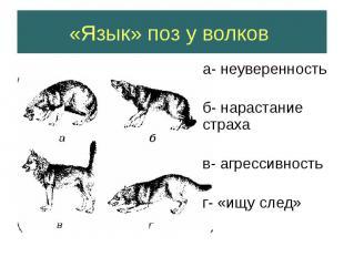 «Язык» поз у волков а- неуверенность б- нарастание страха в- агрессивность г- «и