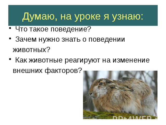 Думаю, на уроке я узнаю: Что такое поведение? Зачем нужно знать о поведении животных? Как животные реагируют на изменение внешних факторов?