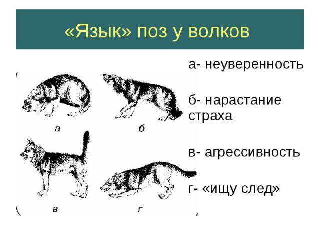 «Язык» поз у волков а- неуверенность б- нарастание страха в- агрессивность г- «ищу след»
