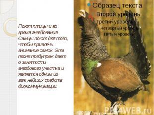 Поют птицы и во время гнездования. Самцы поют для того, чтобы привлечь внимание