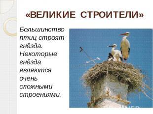 «ВЕЛИКИЕ СТРОИТЕЛИ» Большинство птиц строят гнёзда. Некоторые гнёзда являются оч