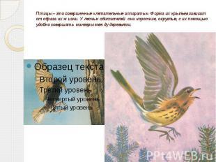 Птицы – это совершенные «летательные аппараты». Форма их крыльев зависит от обра