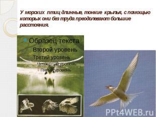 У морских птиц длинные, тонкие крылья, с помощью которых они без труда преодолев